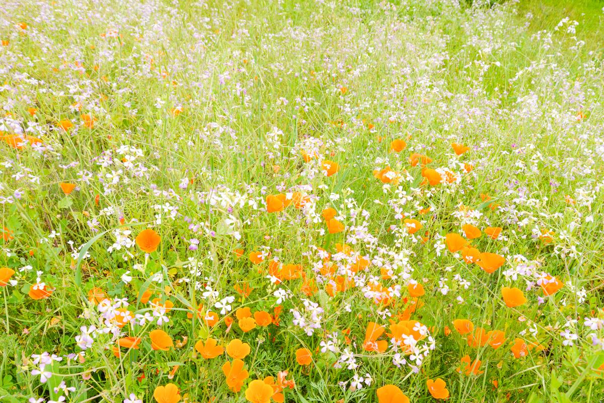 20 Choses À Faire Avec L'Arrivée Du Printemps - Joli encequiconcerne Fleurs Printemps