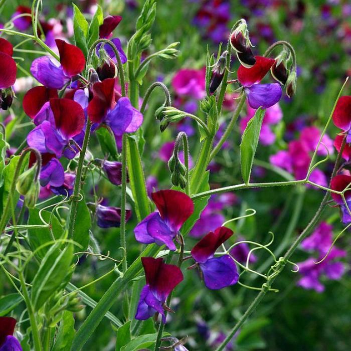 5 Fleurs De Printemps Faciles À Cultiver destiné Fleurs Printemps