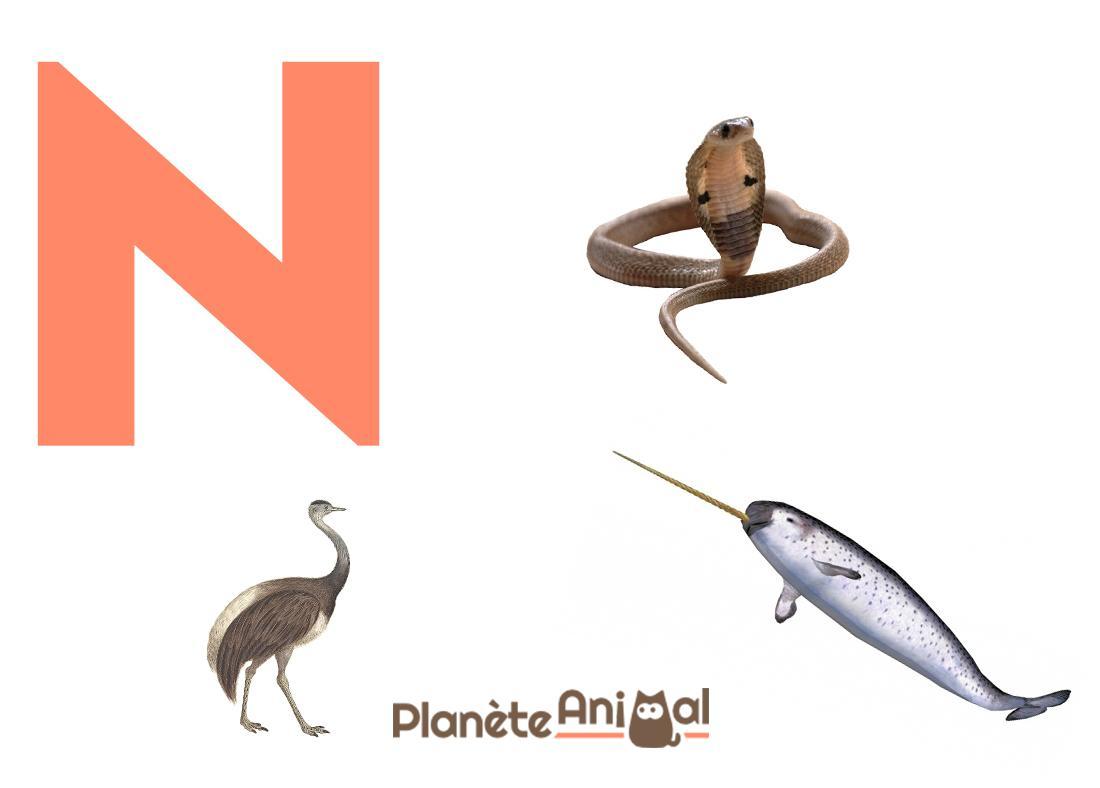 Animal En N Petit Bac - Infini Photo destiné Nom D Animaux Anglais