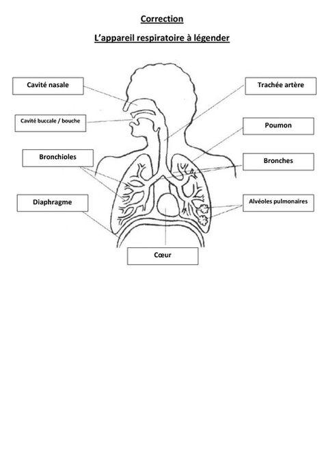 Appareil Respiratoire À Légender - Exercices - Cm1 - Cm2 encequiconcerne Leçon Respiration Cm1