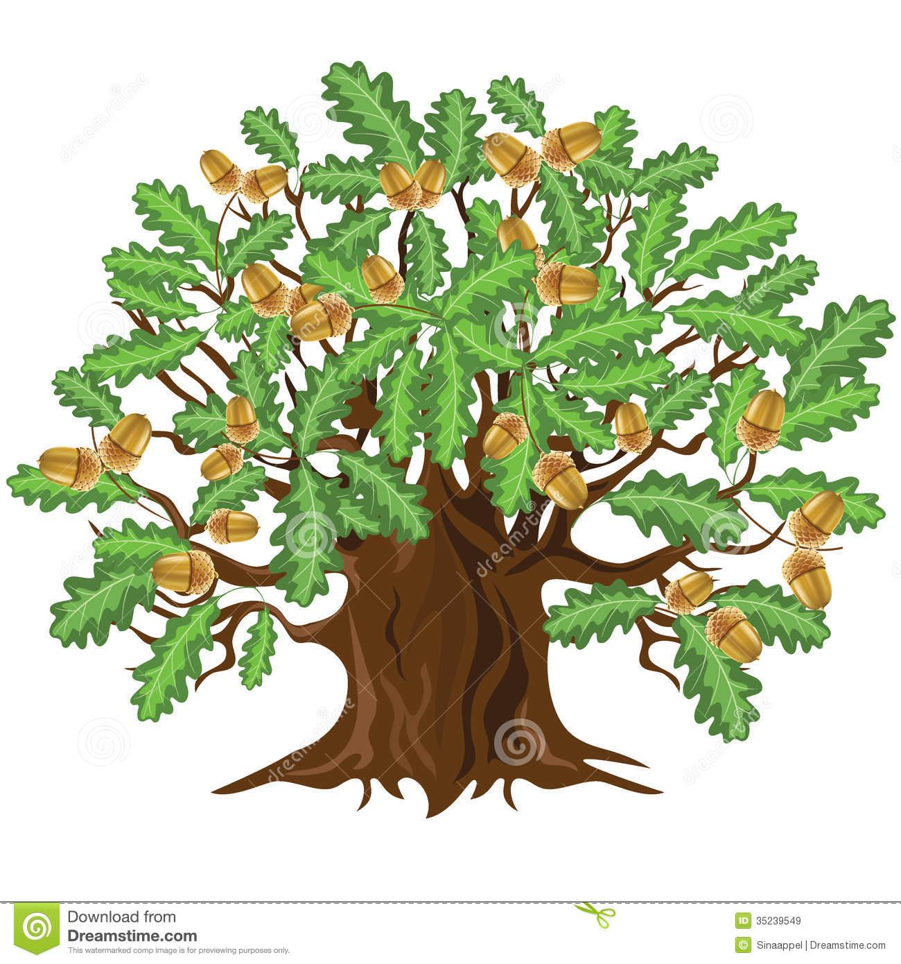 Chêne Avec Des Glands, Illustration De Vecteur Images pour Dessin Chene