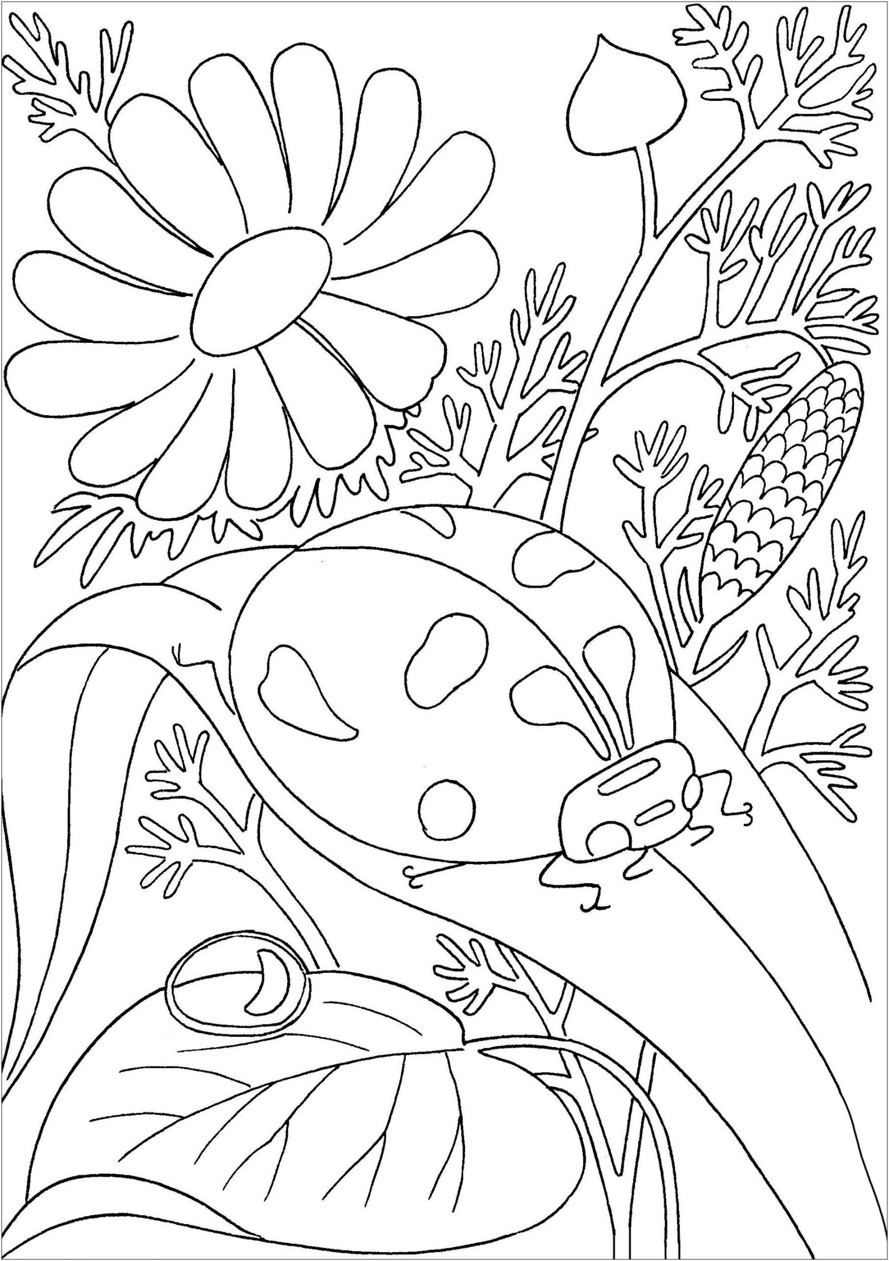 Coccinelle Posée Sur Une Feuille - Papillons & Insectes avec Coloriage De Papillon Sur Une Fleur