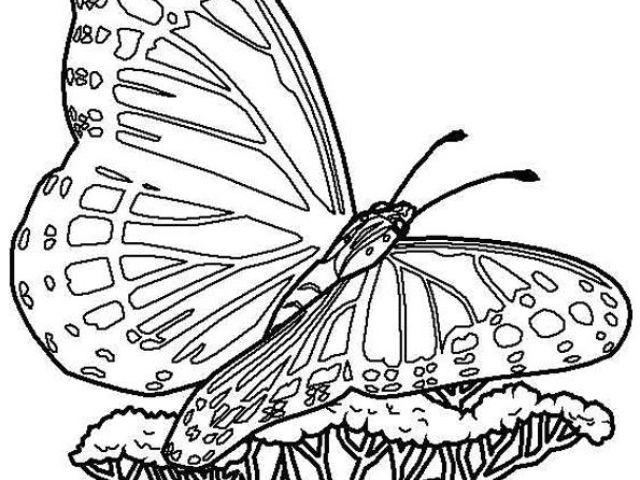Coloriage De Papillon Sur Une Fleur Best 154 Coloriage De concernant Coloriage De Papillon Sur Une Fleur