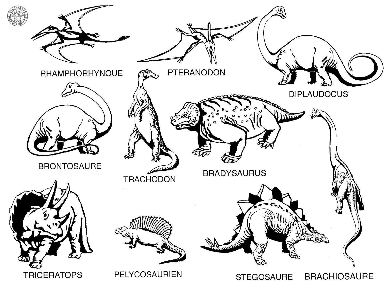 Coloriages Pour Tous: Les Dinosaures dedans Tous Les Coloriages Du Monde