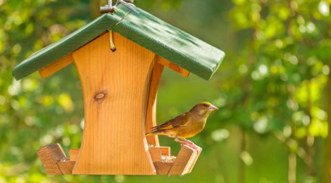 Comment Concevoir Une Mangeoire Pour Les Oiseaux tout Comment Fabriquer Une Mangeoire Pour Oiseaux