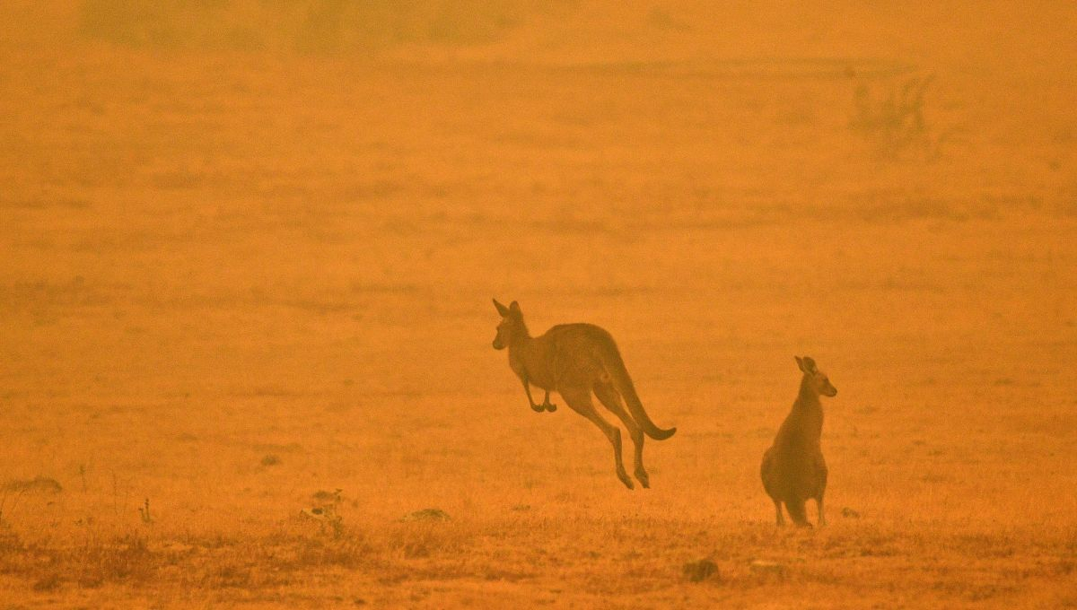 Comment Estimer Le Nombre D'Animaux Morts Dans Les intérieur Nombre De Kangourou En Australie