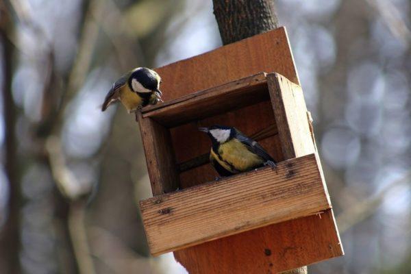 Comment Fabriquer Une Mangeoire Pour Oiseaux ? - Plans.fr pour Comment Fabriquer Une Mangeoire Pour Oiseaux