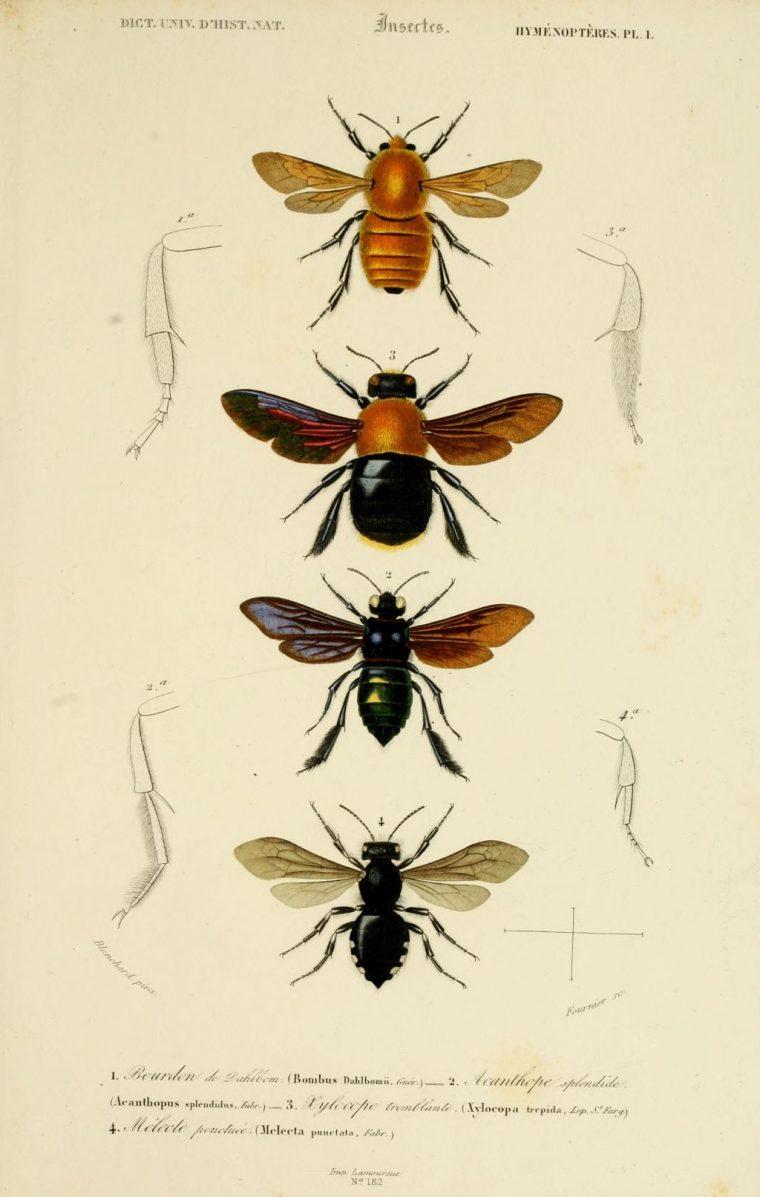 Des Insectes Géométriques Parcourent Une Flore Clairsemée tout Les Noms Des Insectes