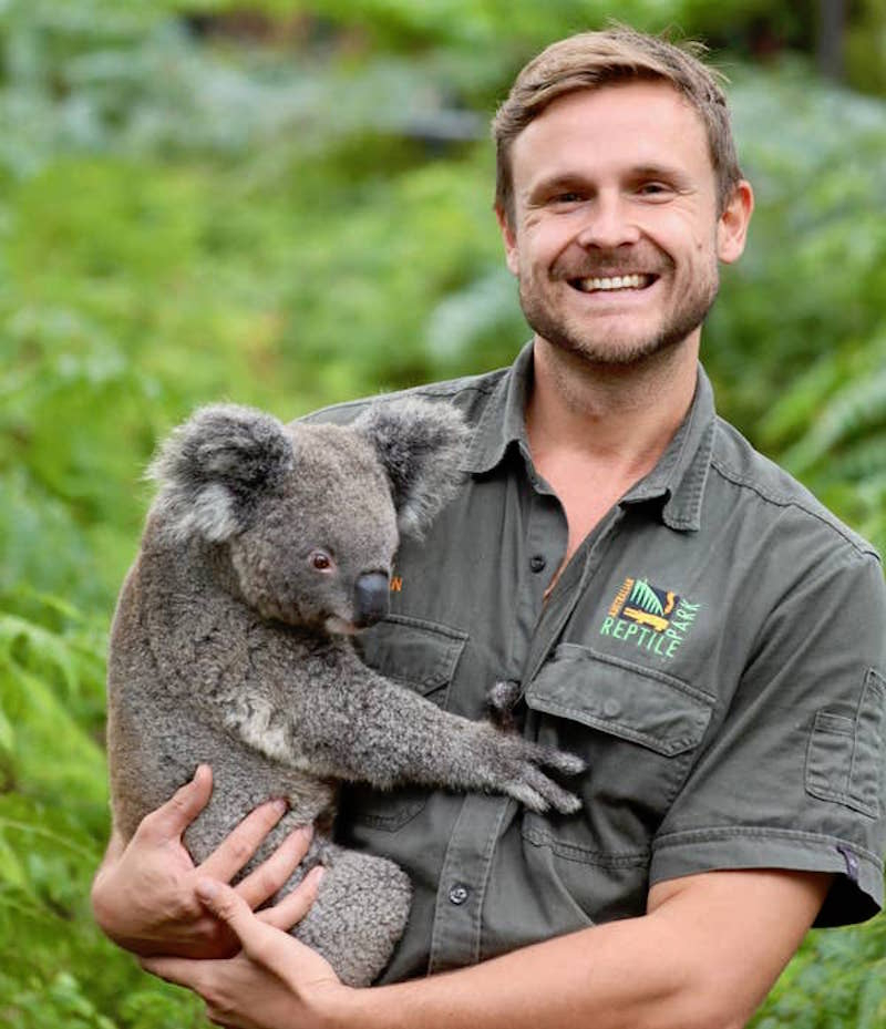 En Australie, Naissance Du Premier Koala Depuis Les pour Nombre De Kangourou En Australie