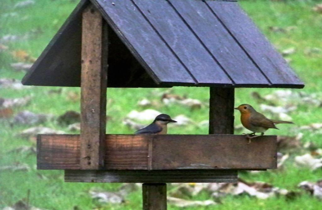 Épinglé Sur Jardinage - Gardening serapportantà Comment Fabriquer Une Mangeoire Pour Oiseaux