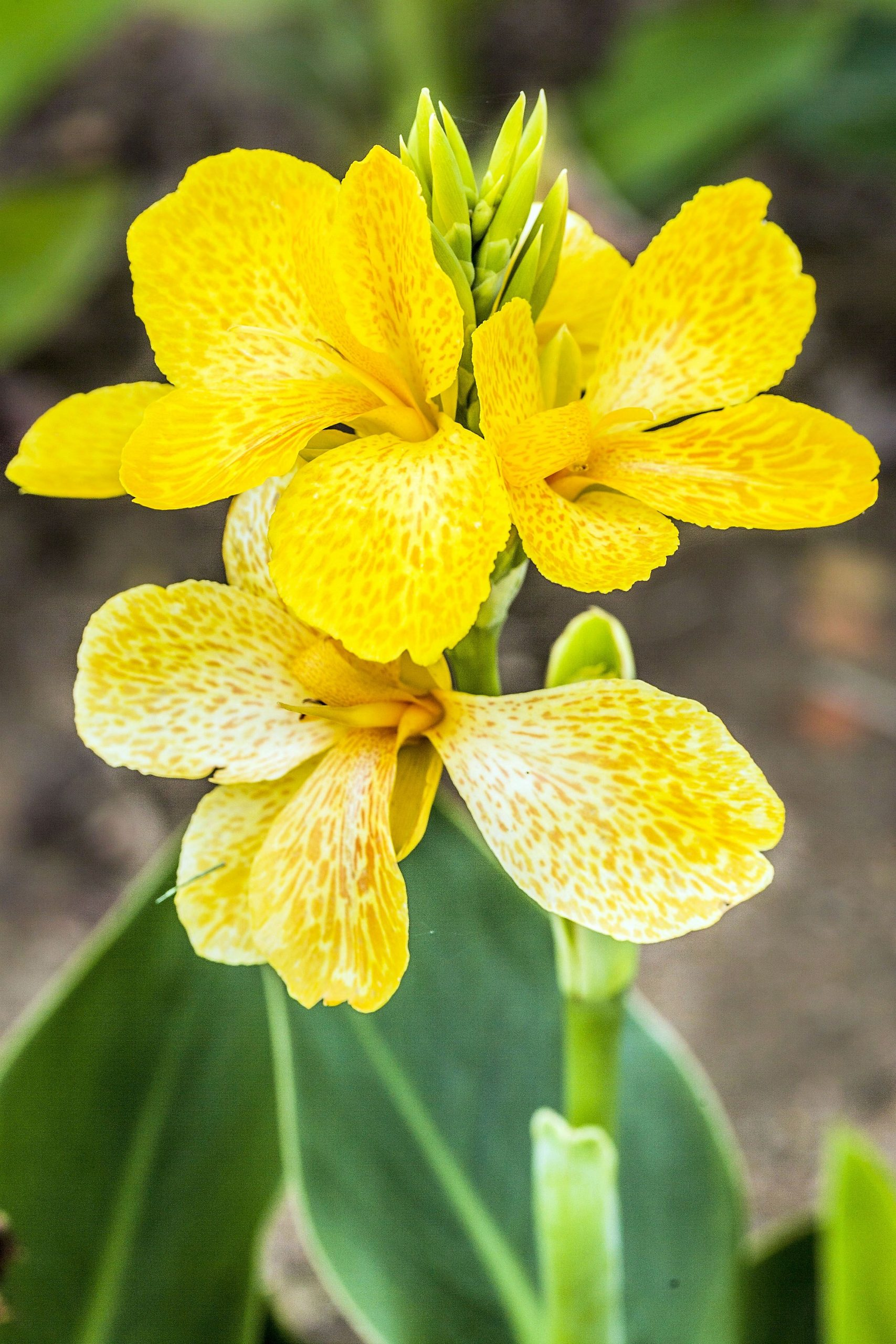 Fleurs Jaune Du Printemps - Agencement De Jardin Aux avec Fleurs De Jardin