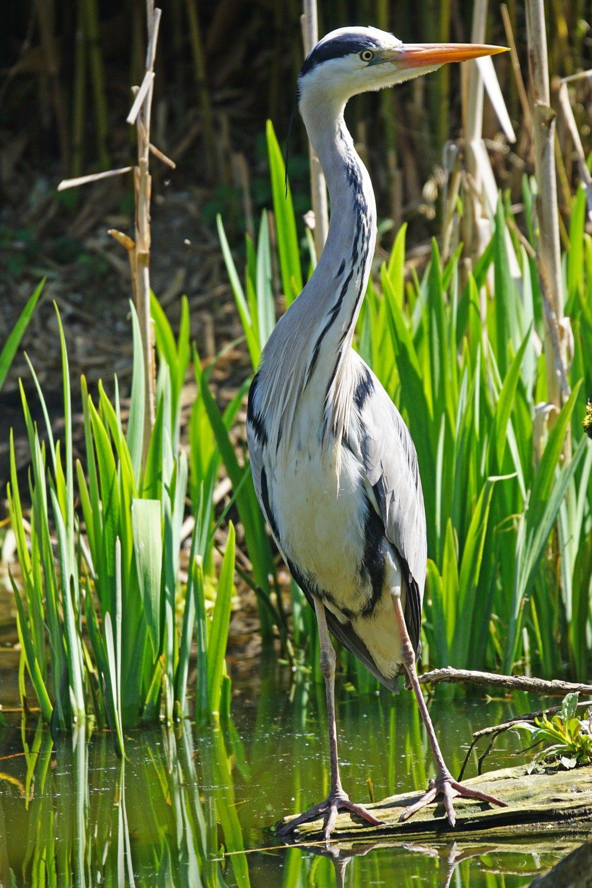 Images Gratuites : Eau, La Nature, Oiseau, Faune, Vert, Le tout Images D Oiseaux Gratuites