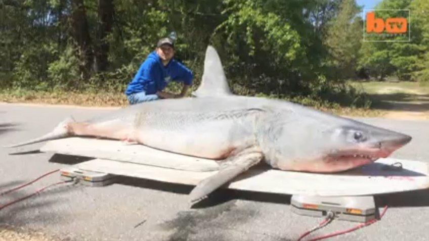 Joey Polk Pêche Le Plus Gros Requin Du Monde Depuis La serapportantà Le Plus Gros Ver De Terre Du Monde