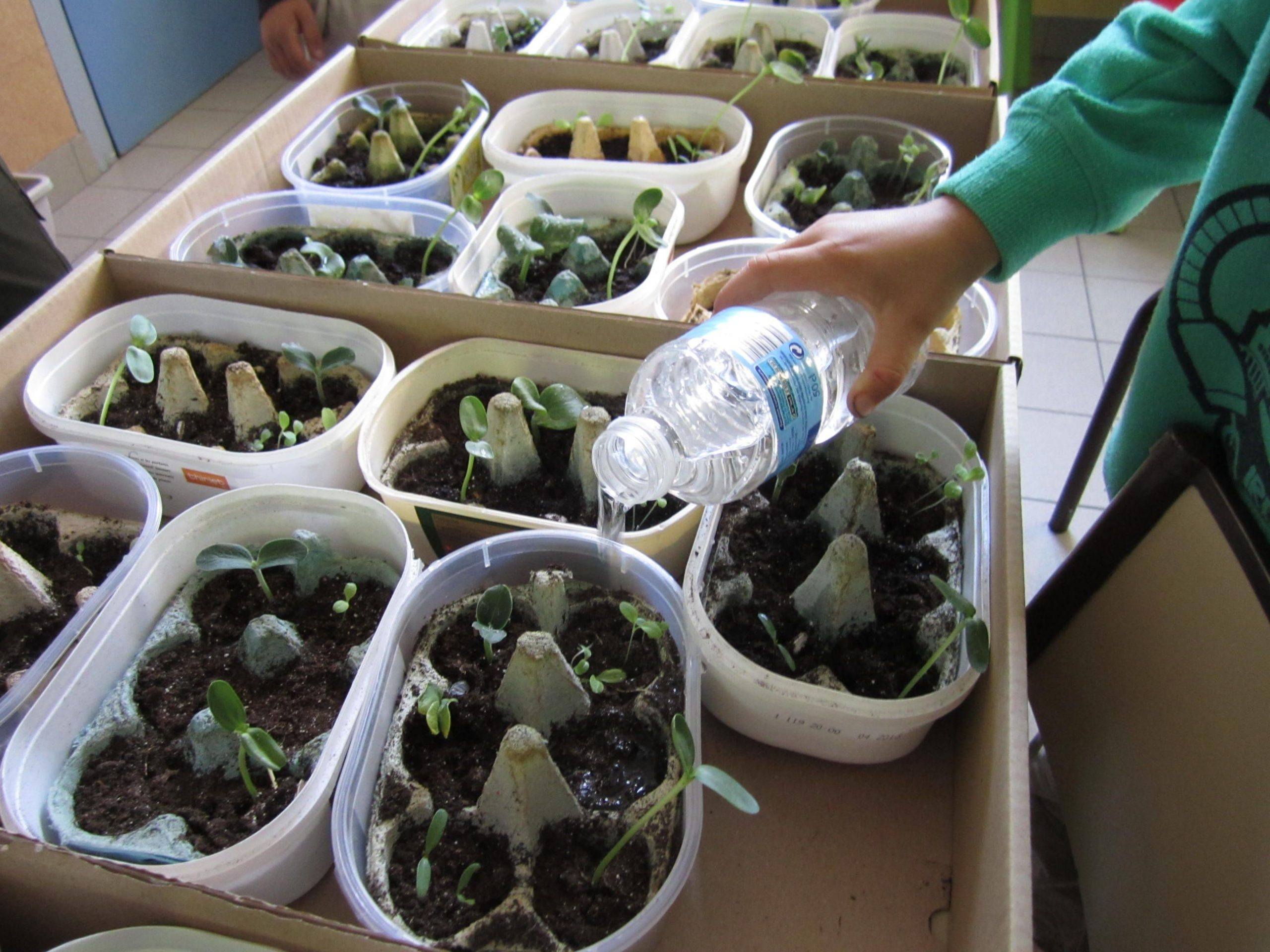 La Classe De Marion - Ressources Pour Le Cycle 1 : Petits pour Plantation Haricot Maternelle
