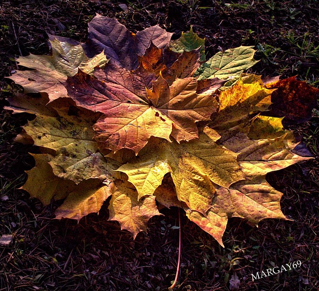 La ..Feuille D'Automne ..   The Autumn Leaf .. La dedans La Feuille D Automne Paroles