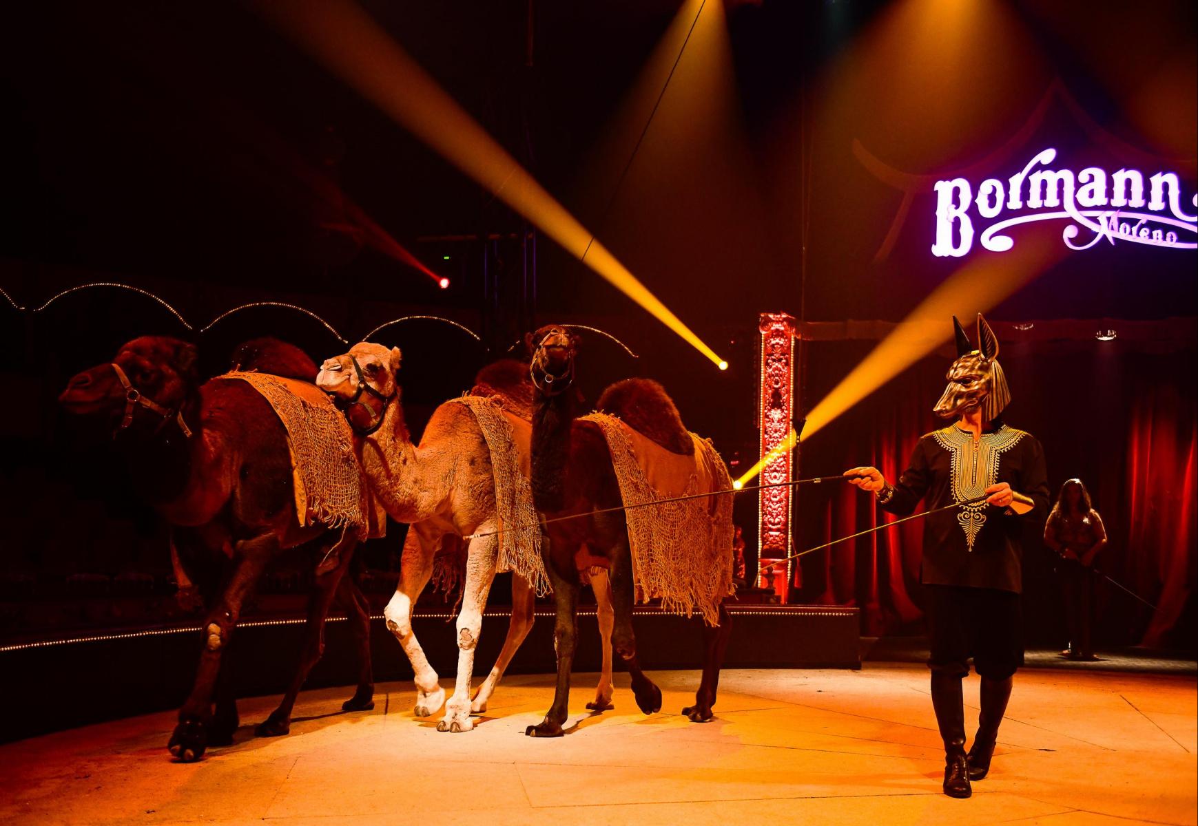 Le Cirque Bormann À Paris Avec Le Spectacle Voyage Dans Le encequiconcerne Venez Venez Dans Mon Cirque