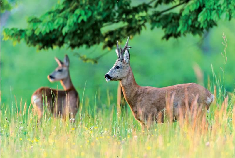 Les Animaux De La Forêt Méditerranéenne , Domaine à Image D Animaux De La Foret
