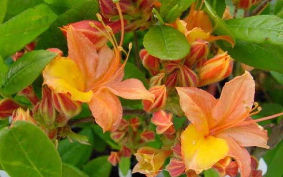 Les Plantes De Jardin Chez Groendekor - Jardin Et dedans Fleurs De Jardin