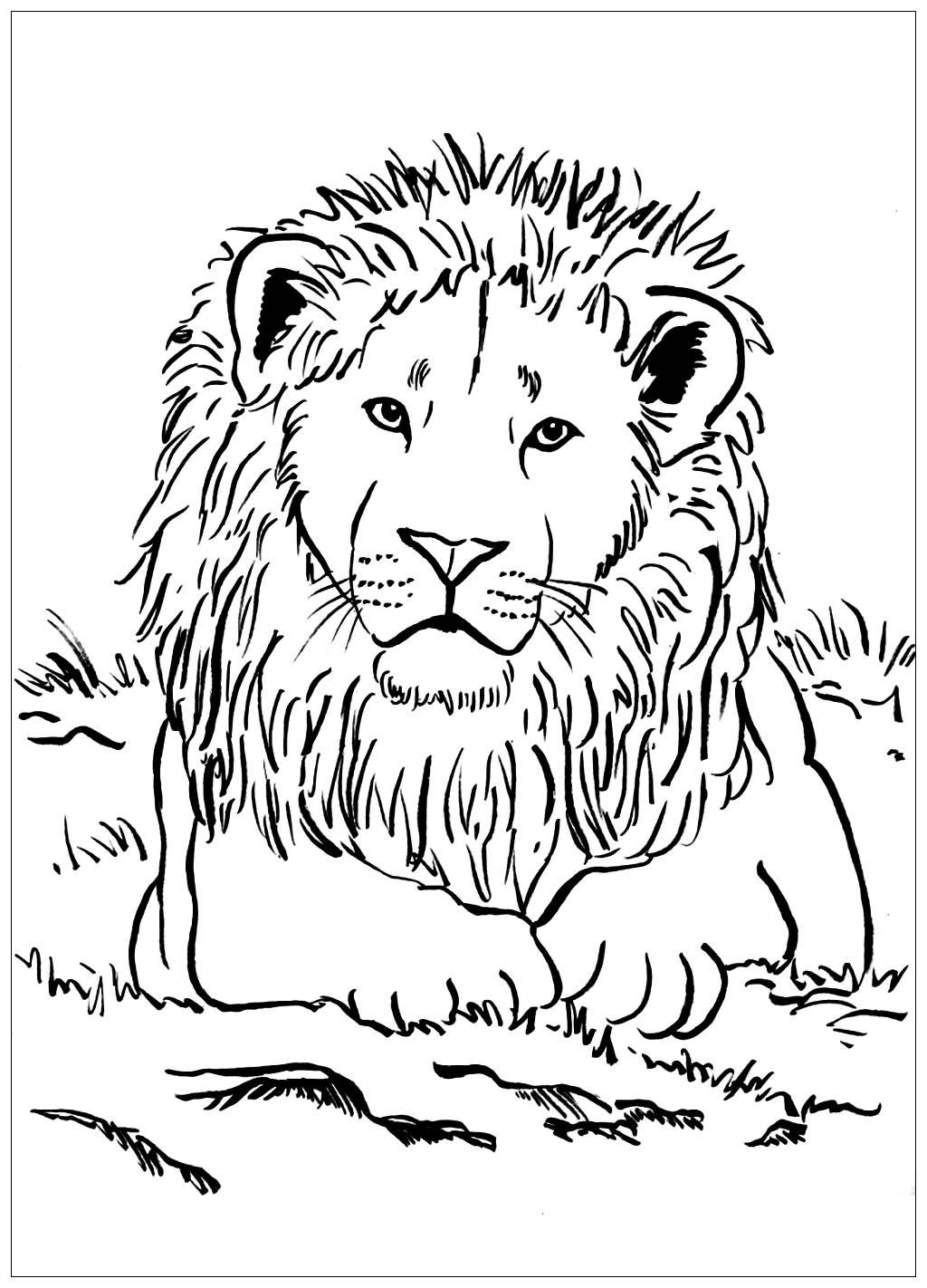 Lion Allongé - Coloriage De Lions - Coloriages Pour Enfants dedans Photo De Lion A Imprimer En Couleur