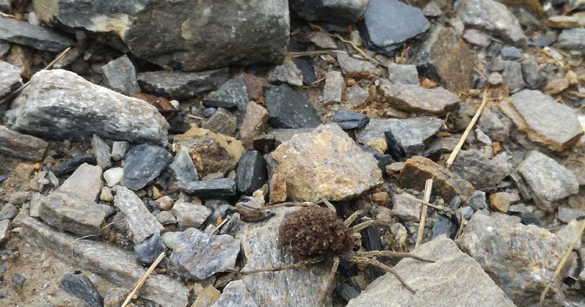 Nature. Araignée-Loup : Un Superbe Spécimen Découvert En encequiconcerne Jeux De Arenier