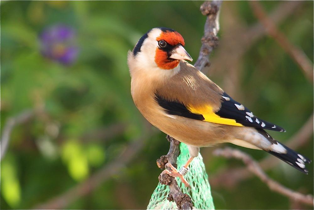 Oiseaux - Photographie Nature - Photos Oiseaux serapportantà Images D Oiseaux Gratuites