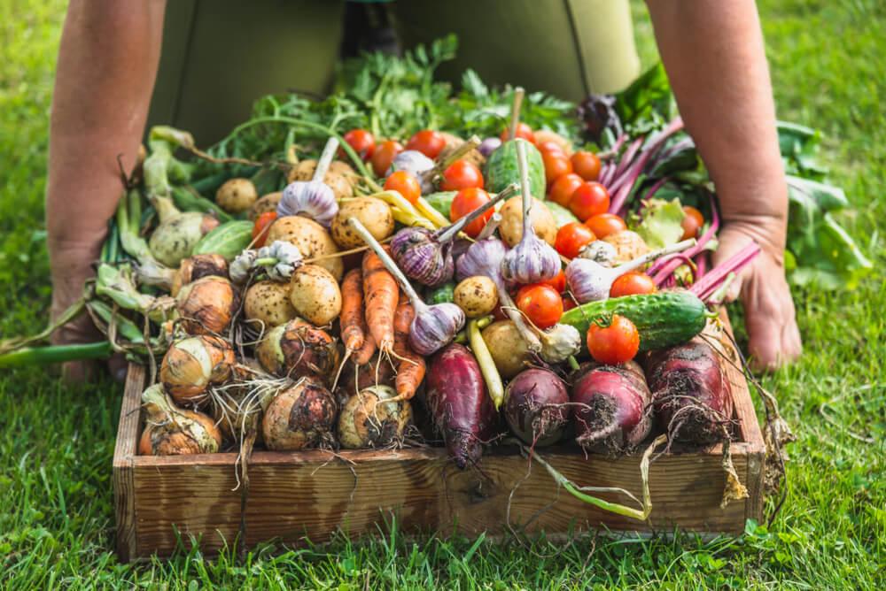 Où Acheter Des Fruits Et Légumes Bio ? Nos Réponses intérieur Legume Ou Fruit En J