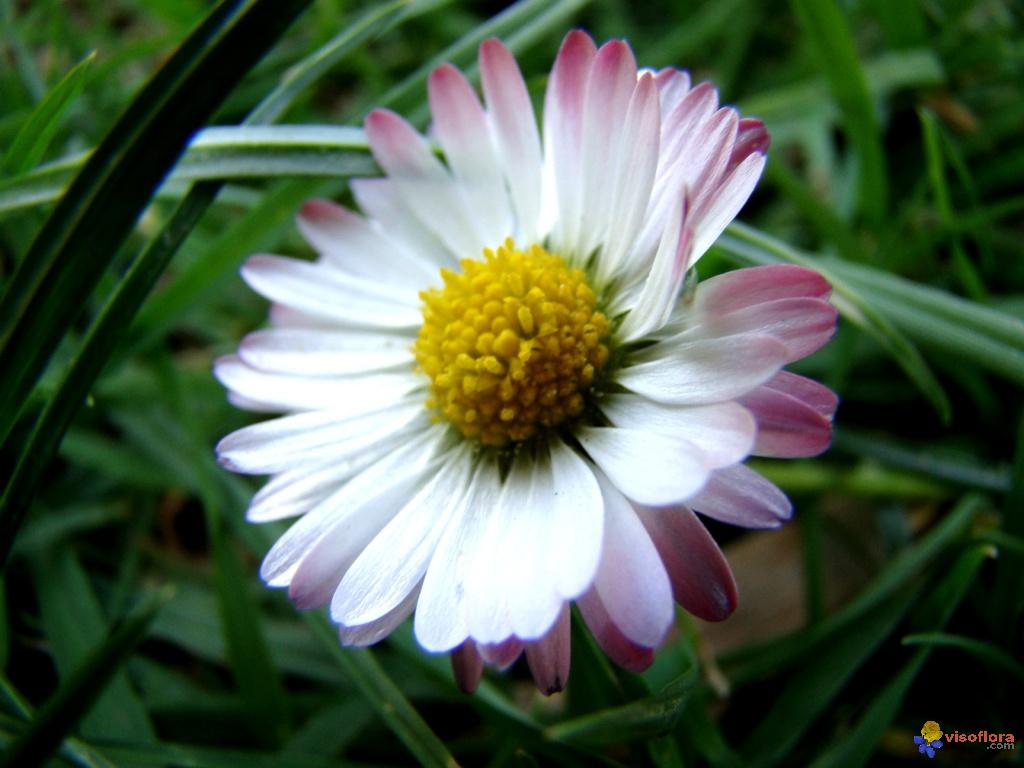Photo : Mes Premières Fleurs Du Printemps 6 tout Fleurs Printemps