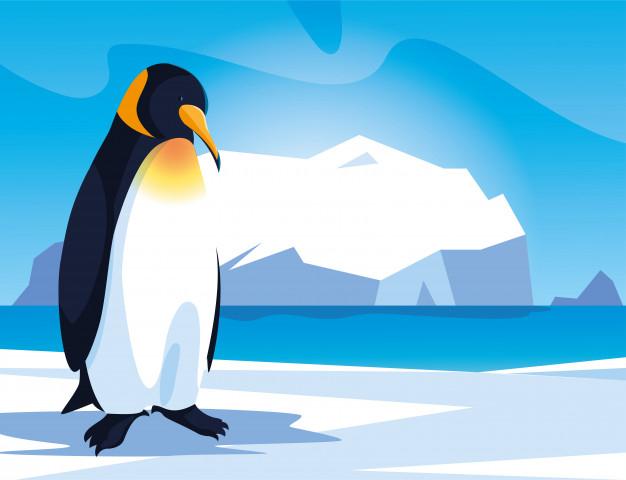 Pingouin Au Pôle Nord, Paysage Arctique | Vecteur Premium pour Un Pingouin Du Pôle Nord