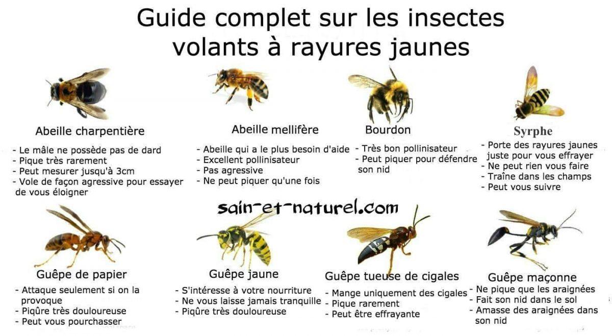 Poster Géant + 44 Stickers , Insectes Avec Les Noms Des à Les Noms Des Insectes