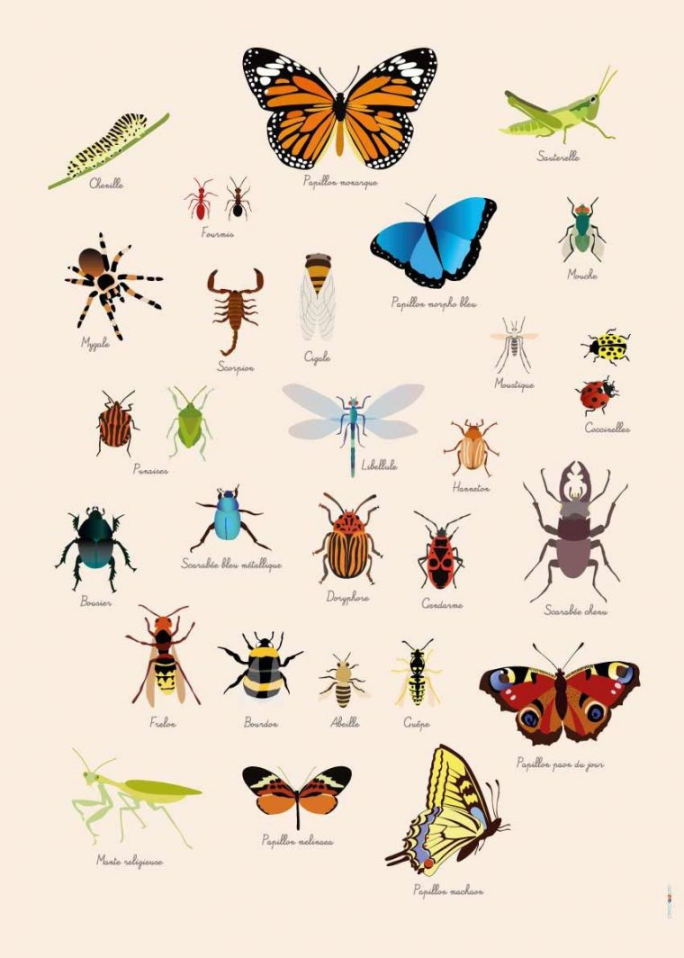 Poster Géant + 44 Stickers , Insectes Avec Les Noms Des intérieur Les Noms Des Insectes