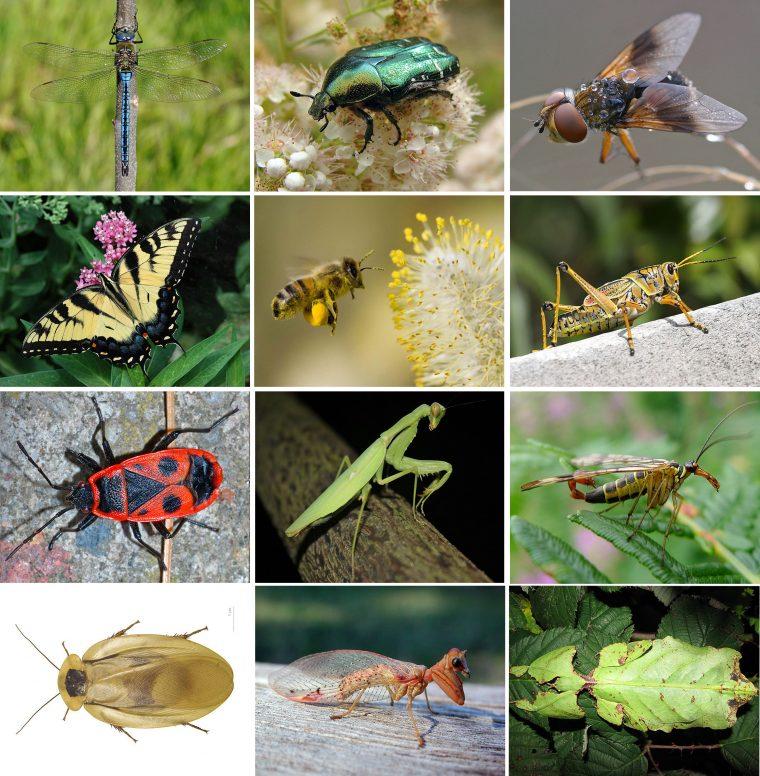 Poster Géant + 44 Stickers , Insectes Avec Les Noms Des tout Les Noms Des Insectes