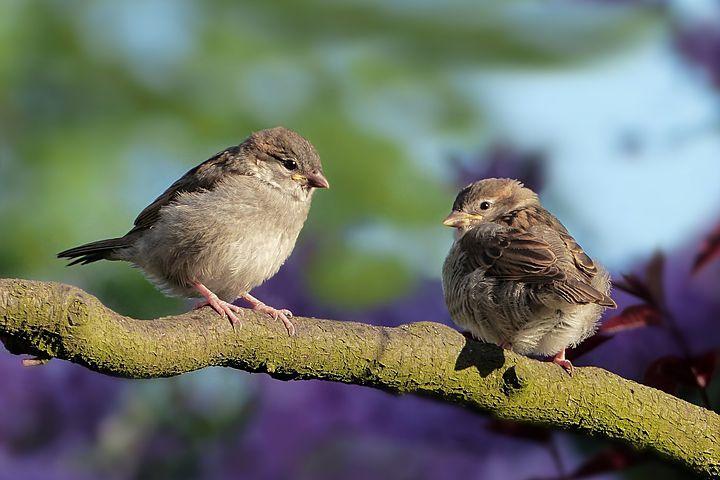 Printemps Images - Téléchargez Des Images Gratuites serapportantà Images D Oiseaux Gratuites