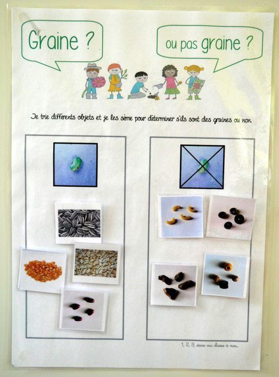 """Projet """"Tous Au Jardin !"""" - 1, 2, 3, Dans Ma Classe À Moi tout Plantation Haricot Maternelle"""