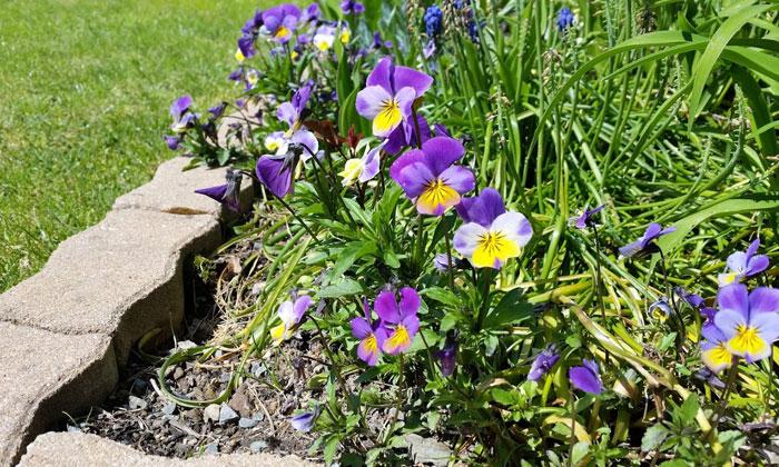 Puzzle Gratuit Fleurs (3758) Par Cr - Paysage / Fleur / Nature intérieur Puzzle Nature Gratuit